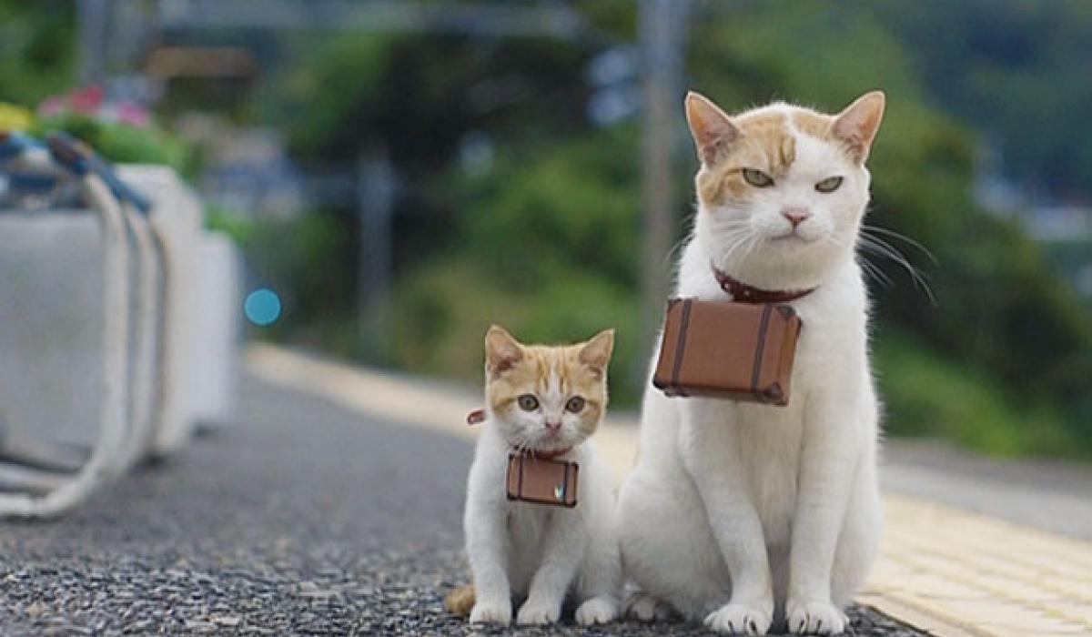 Als de kat van huis is …