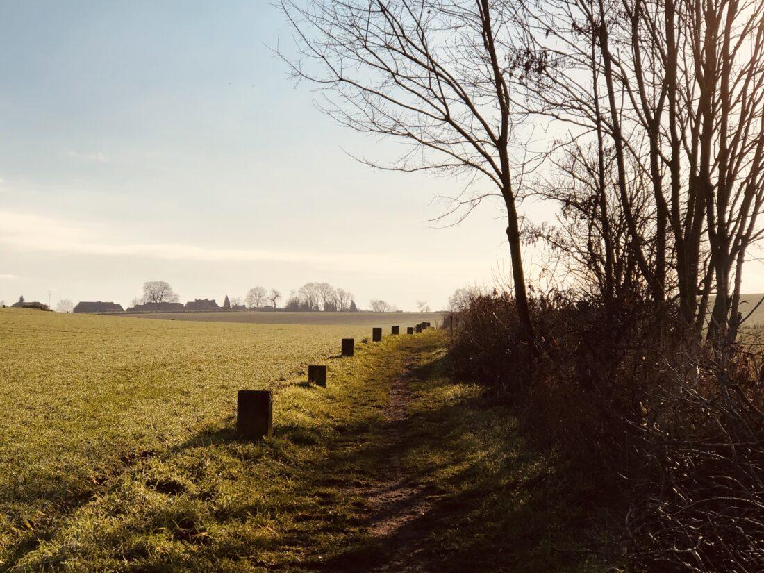 veld-landschap